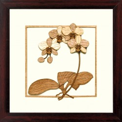 Orchid 10 x 10